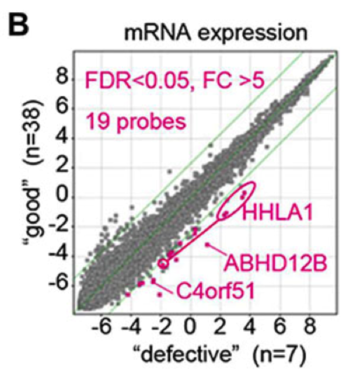 PNAS_koyanagi_Fig2B.png