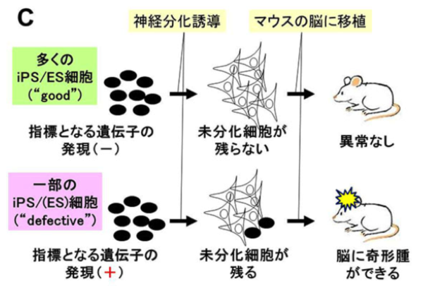 PNAS_koyanagi_Fig2C.png