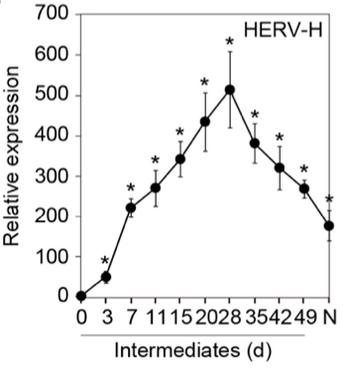 HERV-H.jpg