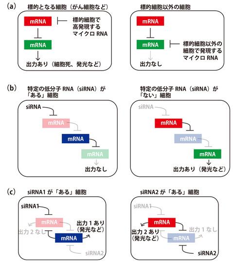 NB_RNA_02.jpg