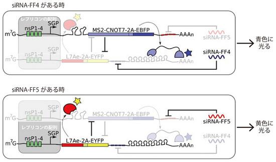 NB_RNA_05.jpg