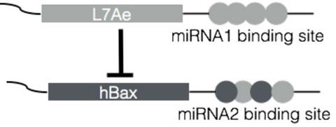 RNA_en.jpg