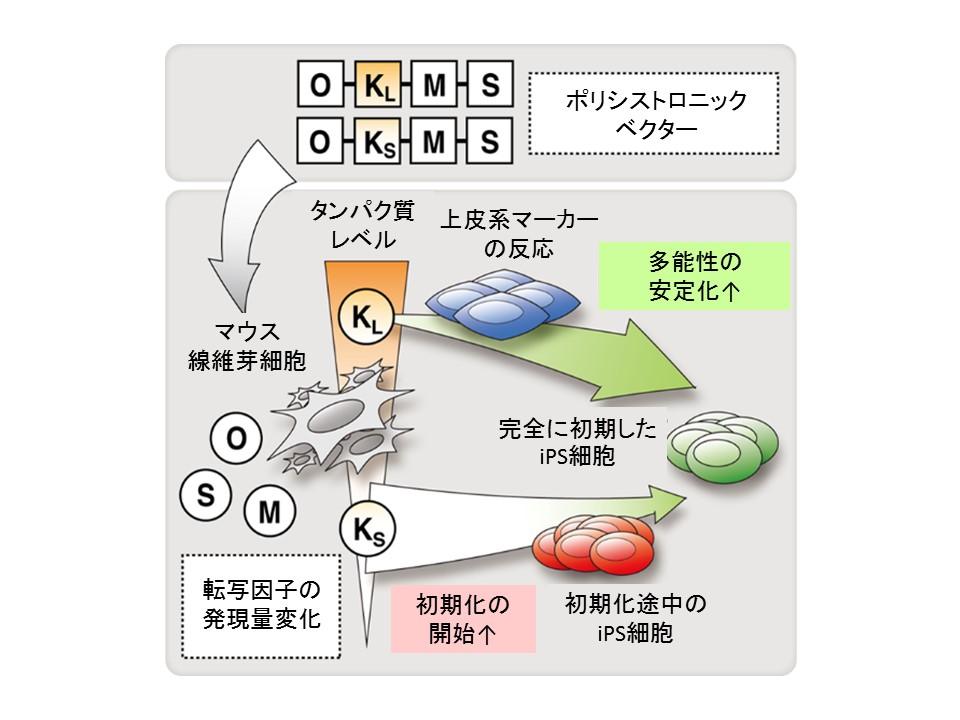 http://www.cira.kyoto-u.ac.jp/images/KW%E5%9B%B3_JP%E8%A8%B3%EF%BC%92.jpg
